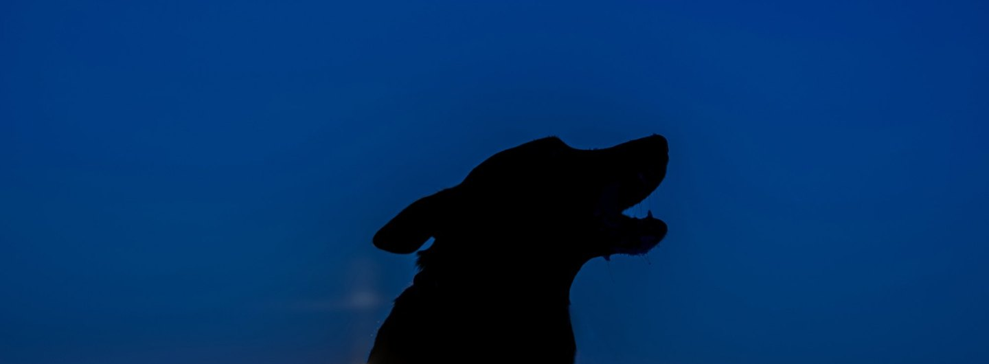 howling dog at night