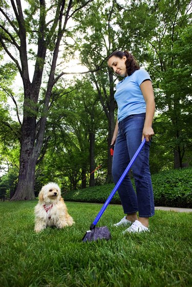 Woman using pooper scooper in grass while dog watches