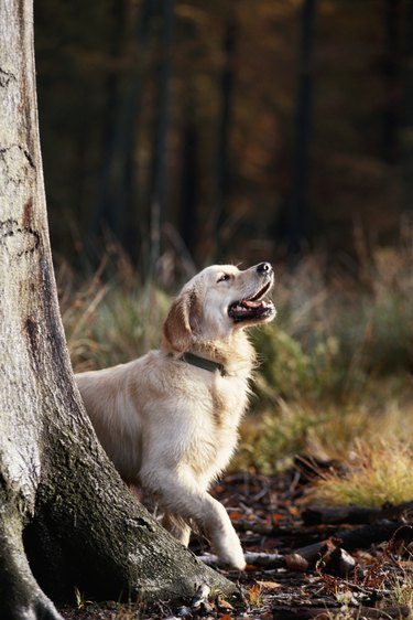 Dog standing by tree