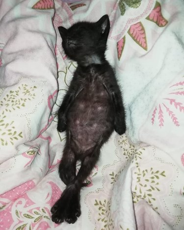 kitten sleeping on its back
