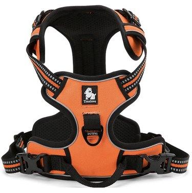 Orange Expawlorer Best No-Pull Dog Harness