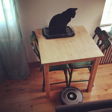 Cats reacting to roombas and robot vacuums