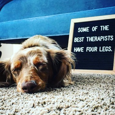 dog sleeps in front of funny letter board