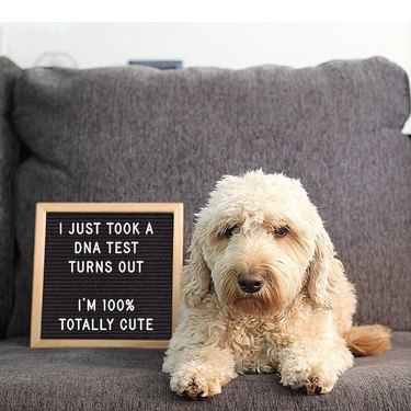 dog poses in front of funny letter board