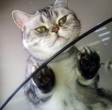 Cats on glass tables