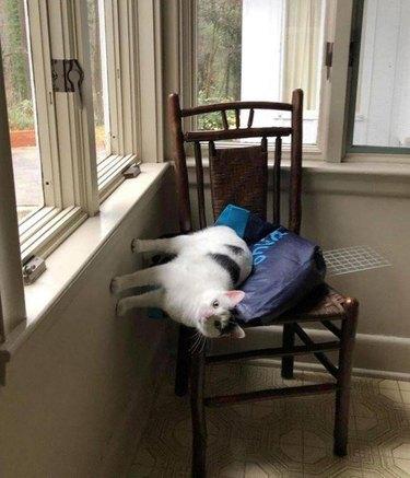 cat sitting sideways