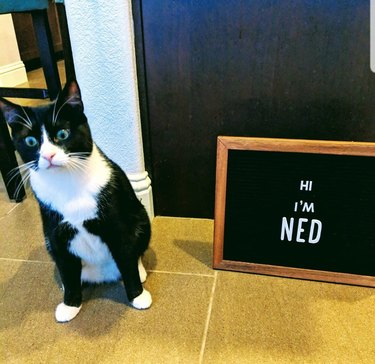silly cat poses next to letter board