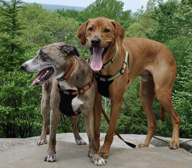 Coastal Pet K9 Explorer Reflective Dog Harness