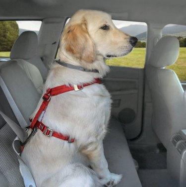 Red Kurgo Dog Car Harness