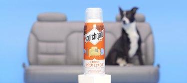 dog sitting behind Scotchgard Fabric & Upholstery Protector