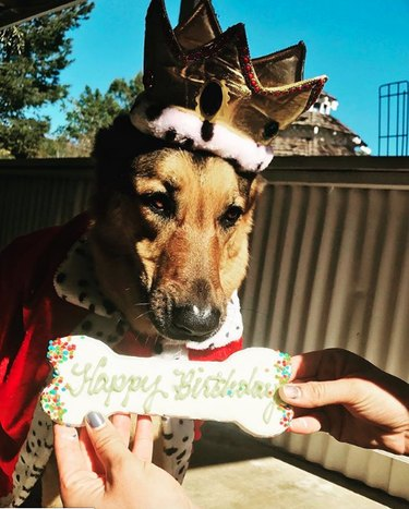 dog wearing crown and receiving a treat