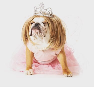 dog in tiara and pink dress