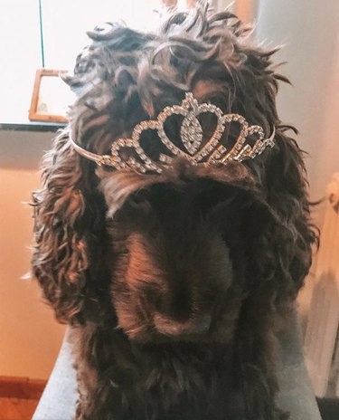 dog wearing glittery tiara