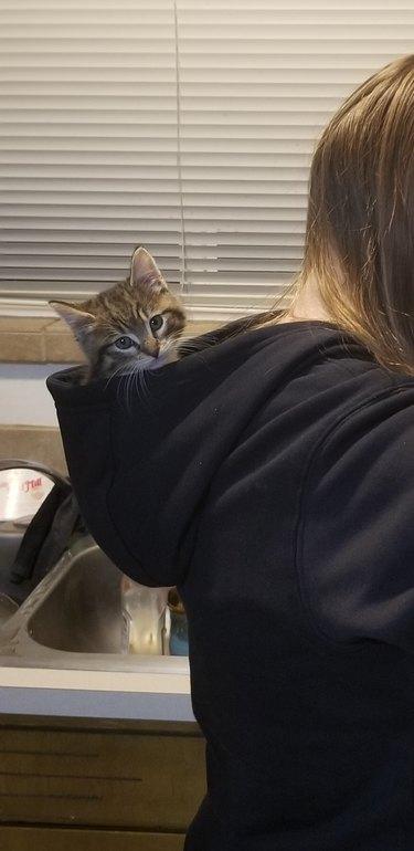Kitten in sweatshirt hood