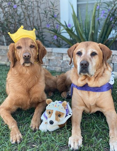 two dogs in crown and cloak with stuffed dog