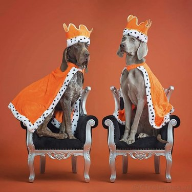 two greyhounds in crowns and cloaks
