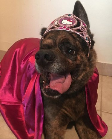 a dog in hello kitty crown and magenta cloak