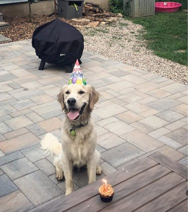 A smiling golden retriever in a party hat next to a cupcake with a lit birthday candle.