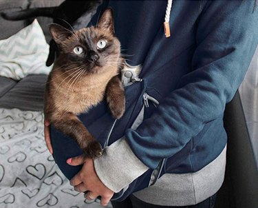 woman holds cat in hoodie with kangaroo pocket