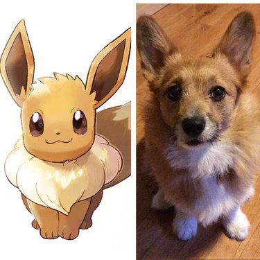 128 Pokemon names for male and female dogs