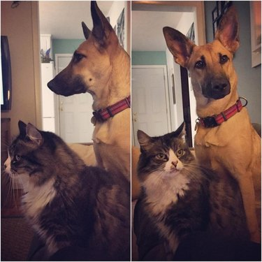 Dog and cat looking at camera in unison