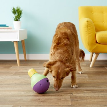 dog plays with treat-dispensing dog toy