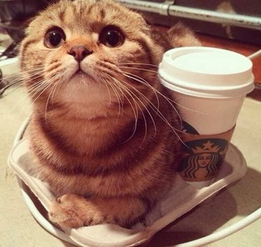 Cat next to a cup of coffee