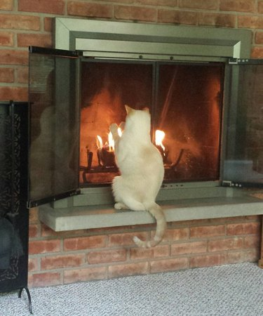 Cat in front of fire