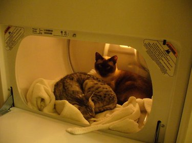 Cats in a dryer