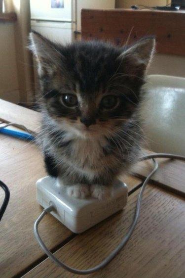 Kitten sitting on laptop charger