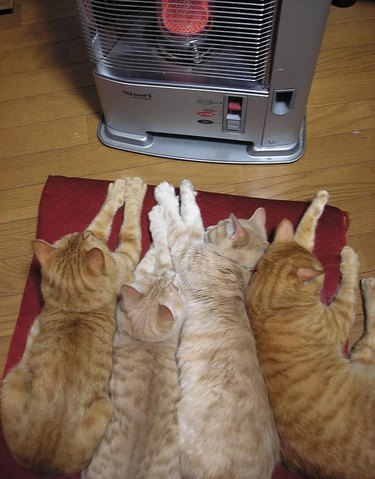 Four cats in front of a space heater