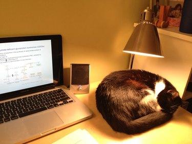 Cat under lamp on desk