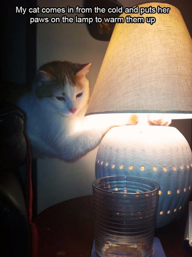 Cat warming paws on lamp
