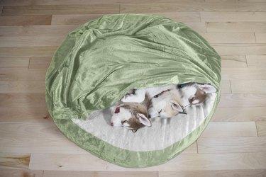 dogs snuggled up in FurHaven Microvelvet dog bed