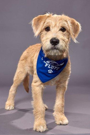 Puppy Bowl XVI participant named Papaya
