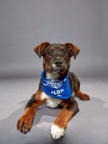 Puppy Bowl XVI participant named Anise