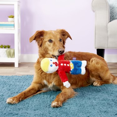 dog with Mr. Bill plush toy in mouth