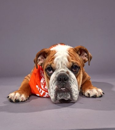 Puppy Bowl XVI participant named Betty