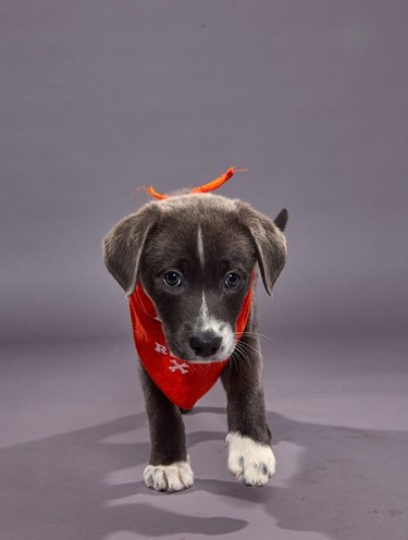 Puppy Bowl XVI participant named Gina