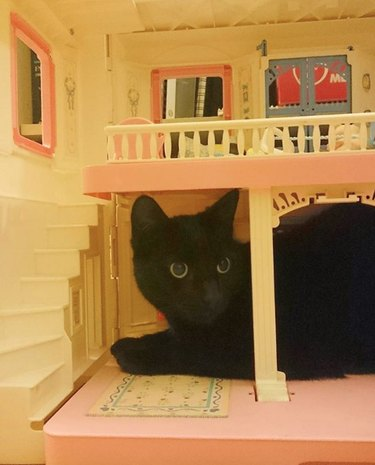 black cat on first floor of dollhouse