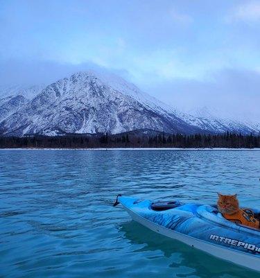 Cat in a kayak