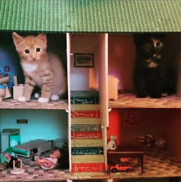 two kittens inside a small dollhouse