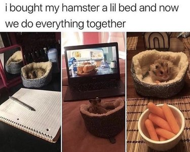 Hamster with a little bed.