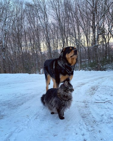 Dog and cat posing in the snow.