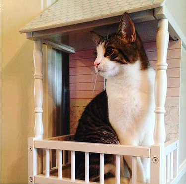 cat on dollhouse balcony