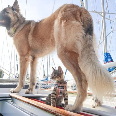 Dog and kitten on a small boat