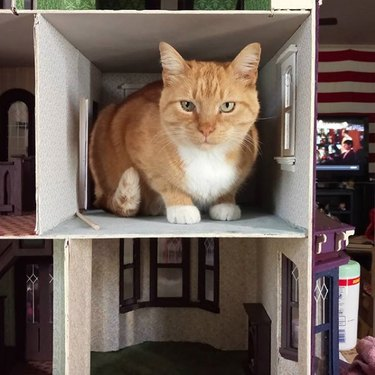 orange cat inside dollhouse