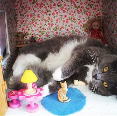 gray and white cat lying in dollhouse