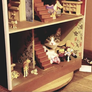 cat sitting beside dollhouse stairs