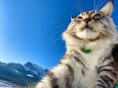 Cat on a mountain